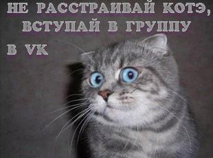Котэ, любит тебя... и ждет в VK!